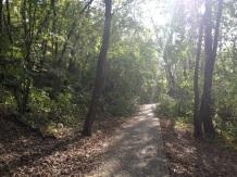 Waldweg auf den Bunkerberg