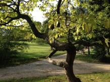 verschlungene Baumstämme