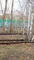 ... Bäume in Gleisen ...