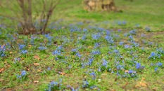 Blumenblau