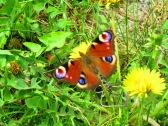 Schmetterlingsbunt