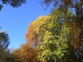 Herbstfarbenspiel
