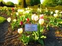 Wo sonst Rosen blühen ... ;)