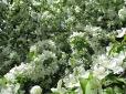 Dieser Baum summte von all den fleißigen Bienchen, die die Blüten bestäuben