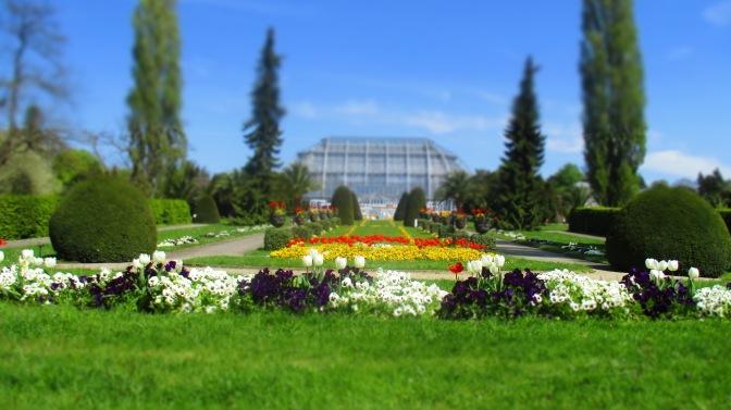 V – Fünfter Stern, die zweite – Botanischer Garten, Berlin FRÜHLING