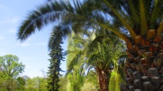 Palmenweg - das ist purer Kurzurlaub