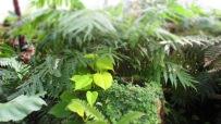 Farne und tropische Pflanzen