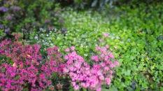 Blüten und Maikraut