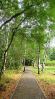 Ein Baum sucht sich seinen eigenen Weg