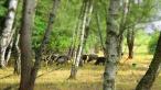 seltene schwedische Schafe weiden hier