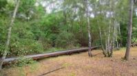 befestigte Wege durch das Naturgebiet mit seltenen und vielfältigen Vegetationen