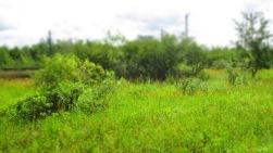 saftiges Grün