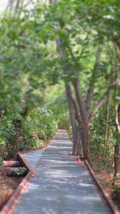 Wege, die an die Natur angepasst werden :)