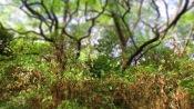 Sträucher und Bäume