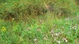 Wiese mit seltenen Pflanze und Blumen