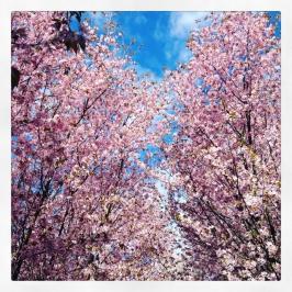 Gärten_der_Welt_5197