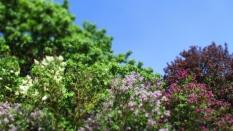 Blütenpracht schon vorm Eingang