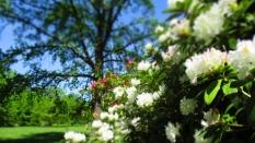 TulipanZauberblüte_6782