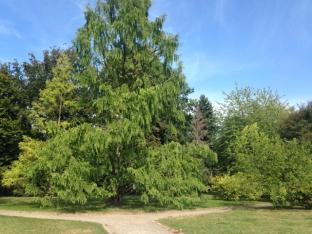 So ein wunderschöner Baum