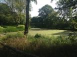 ein grüner See
