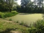 Botanischer_Garten_Pankow_6979