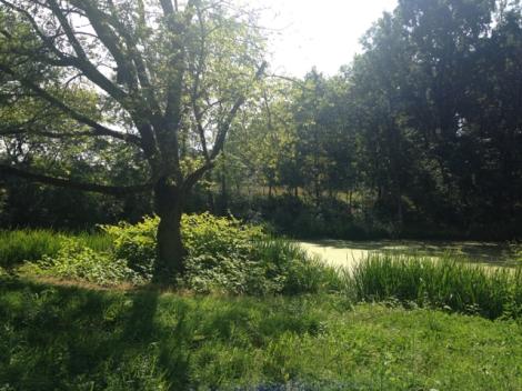 Botanischer_Garten_Pankow_6980