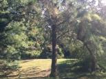 Botanischer_Garten_Pankow_6993
