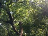 Botanischer_Garten_Pankow_6994