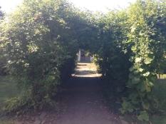 Botanischer_Garten_Pankow_6998