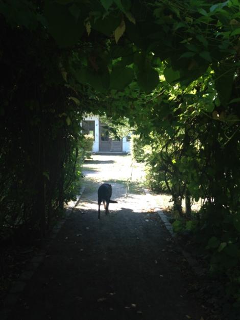 Botanischer_Garten_Pankow_6999
