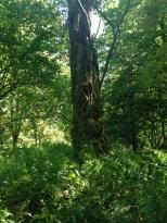 Ich liebe alte, knorrige Bäume
