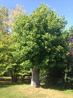 Botanischer_Garten_Pankow_7035