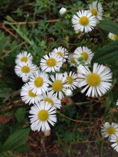 Blumen in weiß/gelb