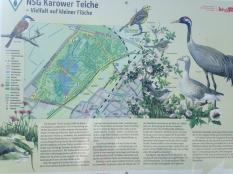 KarowerTeiche_0949