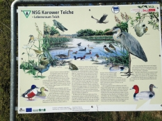 KarowerTeiche_0961